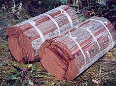 檜皮の採取3