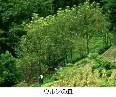 ウルシの森